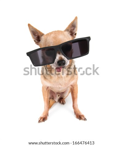 a dog with cool sunglasses on