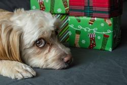 A Doggy Christmas