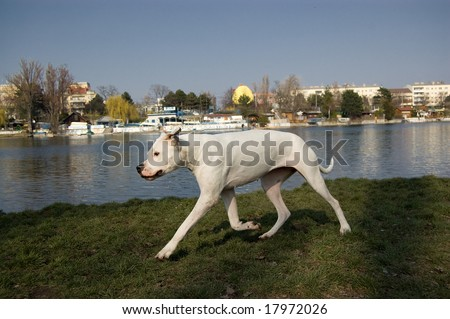 extacy pills pokeballs. Extacy Pills Pokeballs. stock photo : a dogo; stock photo