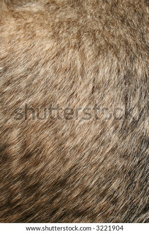 A Dogs Fur