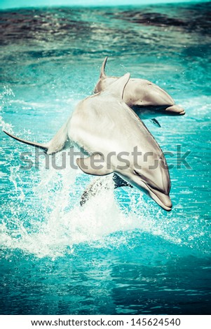 Stock Photo A dolphin in a swimming pool