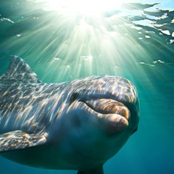 A dolphin underwater with sunbeams closeup
