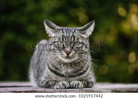 A domestic cat is laying on a old wooden table against a background of green plants. A non-pedigreed cat, circles in blurred background, looks at the camera. A pet in nature. The village, the park.