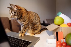 A domestic cat sits at a silver laptop. The animal selects food for delivery. The foot presses the touchpad. Next to it is a box of food and fruit. A red Bank card rests on the box.