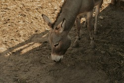 A donkey on a farm, a beautiful photo of a donkey living on the street in a village. Contact zoo, farm.