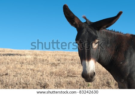 a donkey portrait (copy space)