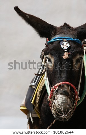 A donkey used for carrying tourists up from the harbour at Fira, Santorini (a 1,000ft climb) - stock photo