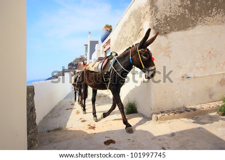 A donkey used for carrying tourists up from the harbour at Fira, Santorini (a 1,000ft climb)