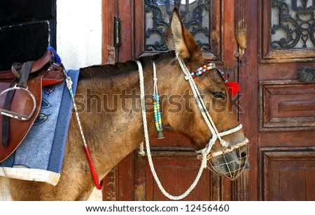 A donkey waiting for tourists wanting a ride to the harbour, standing beside a door in Fira, Santorini, Greece