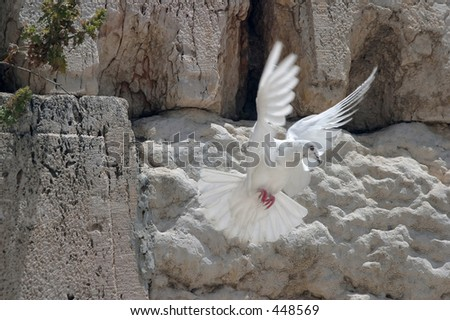 A dove flying from the wailing wall.