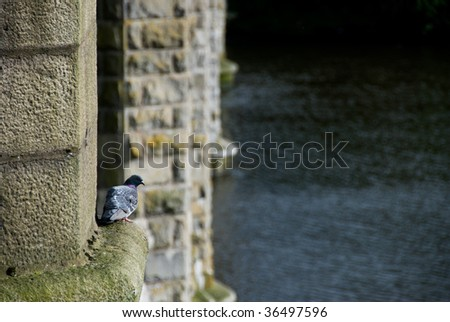 A dove resting on a ledge on a bridge over the river don, Aberdeen