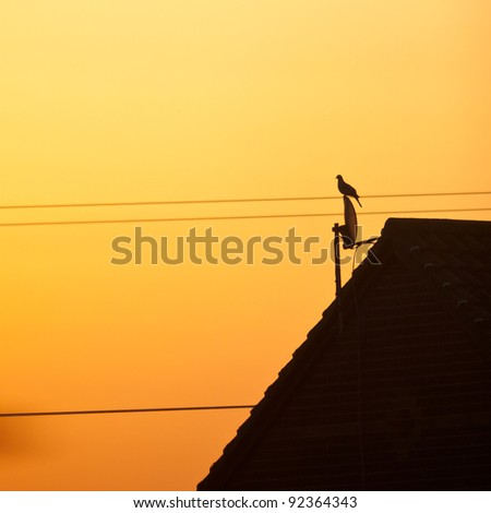 A dove sits atop a satellite dish against an orange sunrise.