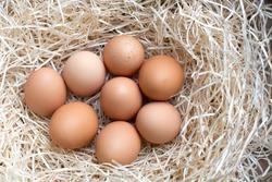 a dozen eggs farm eggs in Asturias.