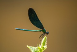 A dragonfly close up photography from a side