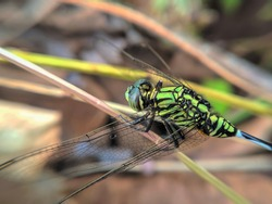 a dragonfly perched on the weeds