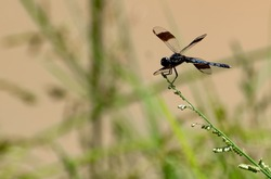 A dragonfly perching on a wildflower in the meadow