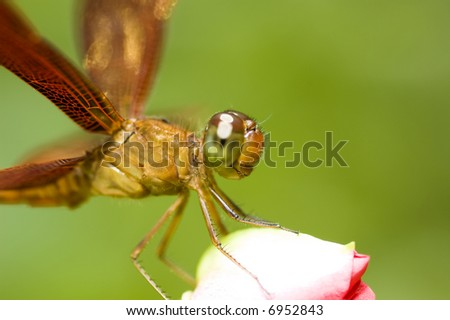 A dragonfly resting on a flower bud