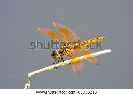 a dragonfly stay on branch in summer - stock photo