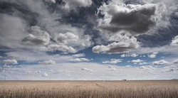 A dramatic cloudy sky over the Canadian prairies with a seeded wheat field in Rocky View County Alberta Canada.