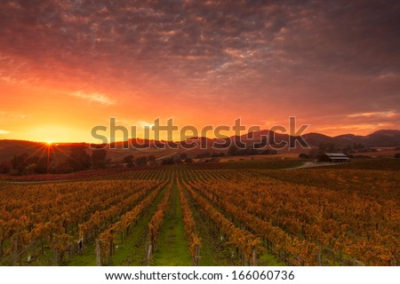A dramatic sunrise over the vineyards of world famous Napa Valley in Autumn.