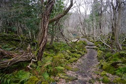 a dreary winter forest with bare and fallen trees