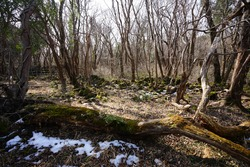 a dreary winter forest with bare trees