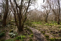 a dreary winter forest with bare trees and vines