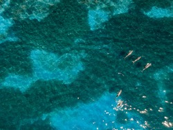 A drone shot depicting a pod of dolphins playfully swimming around in the turquoise, shallow waters of Lincoln National Park, South Australia.
