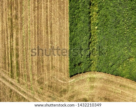 A drone shot from above on agricultural fields during the harvest season. Rich crop of crops in the middle of summer. Cleaning of acreage in the field.