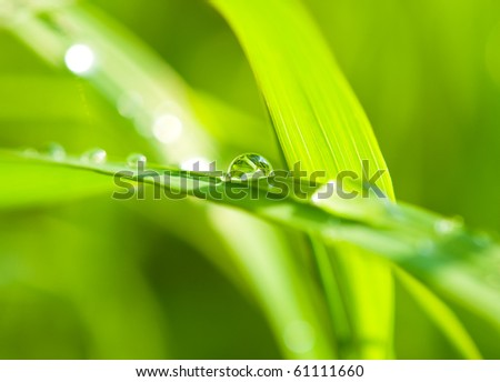 a drop of dew on blades of grass
