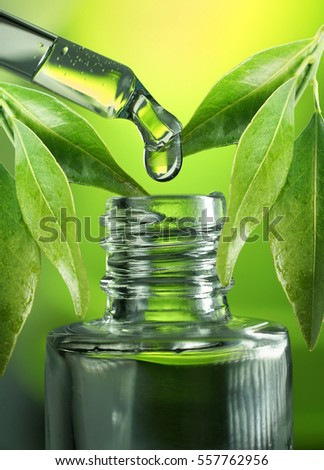 A drop of eucalyptus oil close-up macro drips from a pipette into a glass bottle on a green and yellow background with beautiful juicy leaves of eucalyptus.