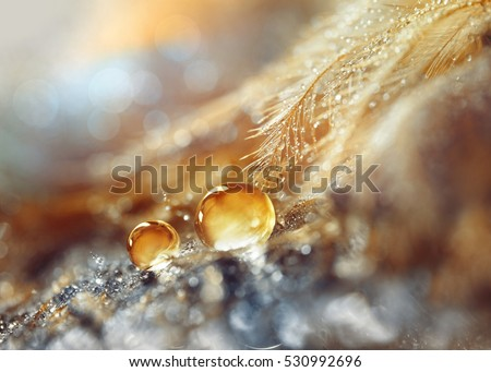 a drops of water dew on a...