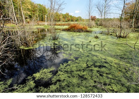 a duckweed covered swamp in...