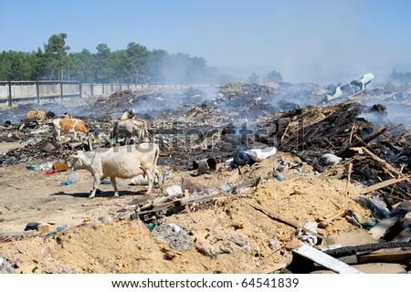Burning Garbage Dump a Dump With Burning Garbage