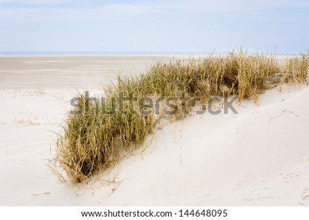a dune with dune-grass at the German Sea (St. Peter Ording/Germany)