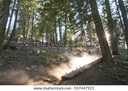 A dusty trail that lead to the General Grant Tree in Sequoia National Forest.