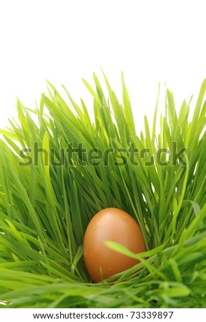 a easter nest with egg in the grass...........