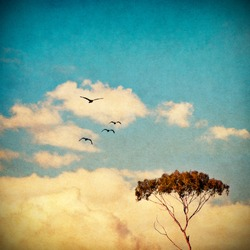 A eucalyptus tree done in a vintage style with cross-processed colorations.