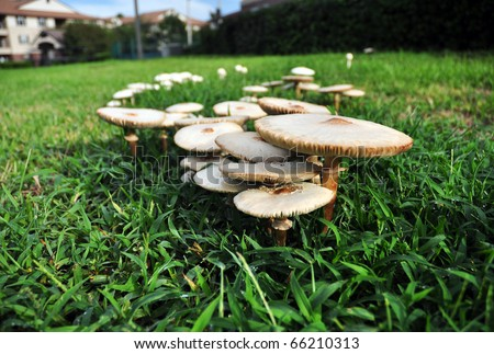 a fairy ring of mushrooms
