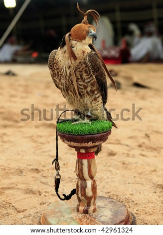 A falcon sits on its stand at a desert camp in Qatar, Arabia, while (out of focus) Arabs in Gulf robes relax in the traditional tent behind.
