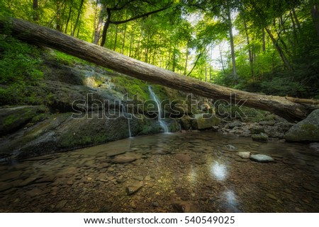 a fallen log suspended over a...