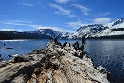 A fallen tree at Fallen Leaf Lake in South Lake Tahoe, CA creates a breathtaking focus point against the snowy mountains and glassy lake.