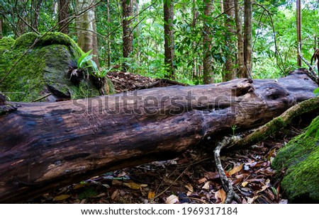 A fallen tree in a forest. Fallen tree. Old tree fallen down. Tree fell
