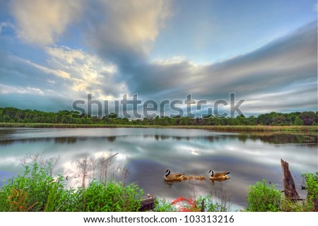 A family of Canadian geese swimming serenely on a pond in Maryland near the Chesapeake bay. - stock photo
