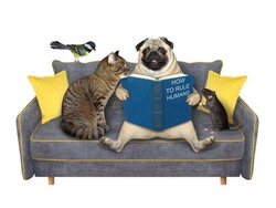 A family of pets is reading a book on a gray sofa. White background. Isolated.
