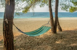 A fantastic landscape of southern nature   a hammock, sand and azure water and pines on the Black Sea coa -  in warm autumn     and pine trees in Pitsunda .  Abhazia