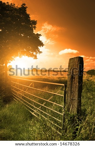 A farm fence leading into a corn field.