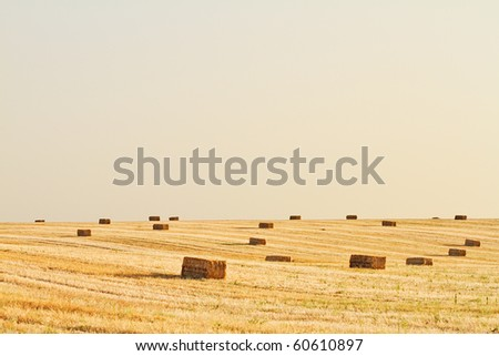 A farm field in the countryside filled with straw bales
