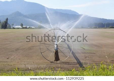 A farm in northwest Washington State is freshly planted and irrigated/Irrigating Washington State Farm Land/Irrigation is used to water freshly seeded acreage in Northern Washington State.