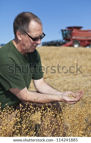 A farmer  holding a sample of this years flax harvest with his combine in the background